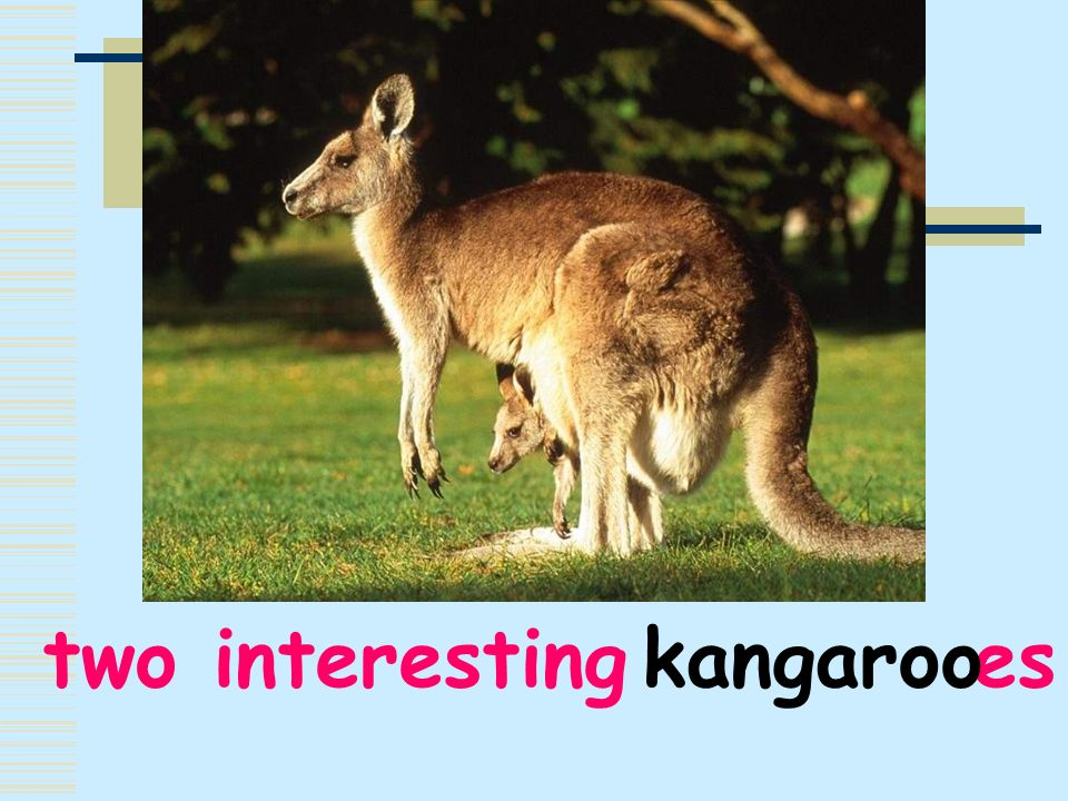 two interesting es kangaroo