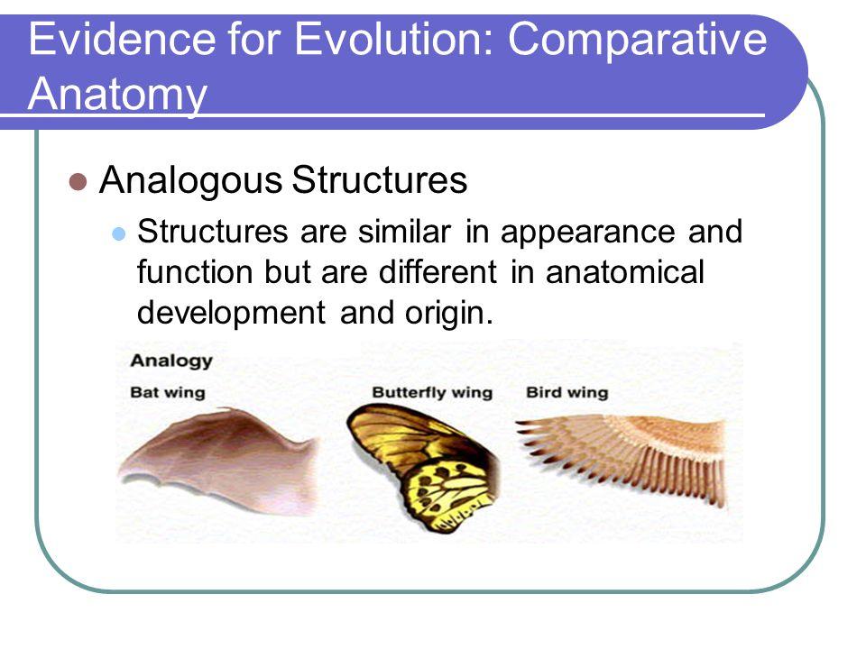 Fein Evidence Of Evolution Comparative Anatomy Fotos Menschliche