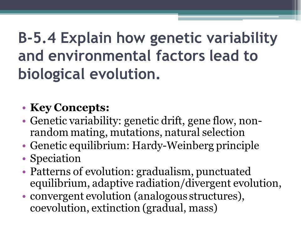 Standard B5 The student will demonstrate an understanding of – Patterns of Evolution Worksheet