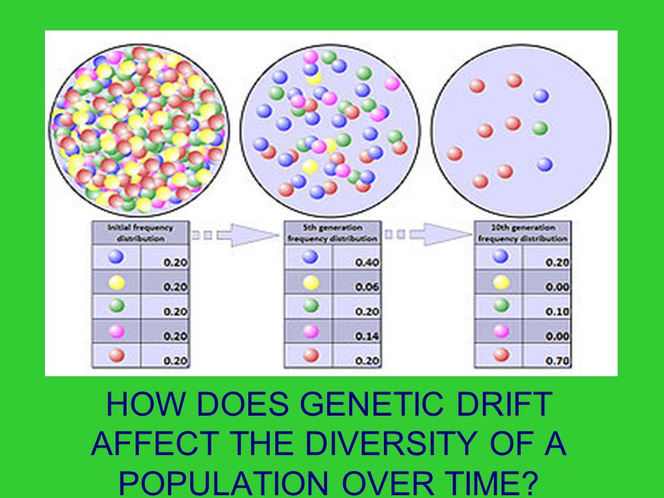 Why Does Natural Selection Affect Gene Frequency
