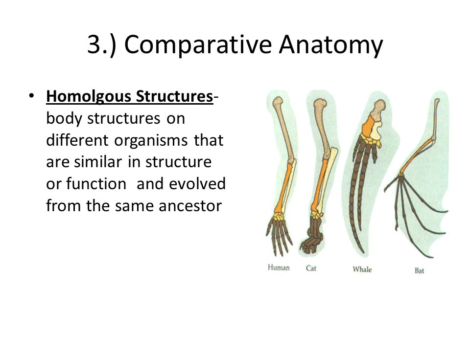 changes of structure of anatomy as human evolution evolves essay Submit any pending changes before refreshing this page  human evolution in what way does comparative anatomy explain evolution  how similar in structure it .