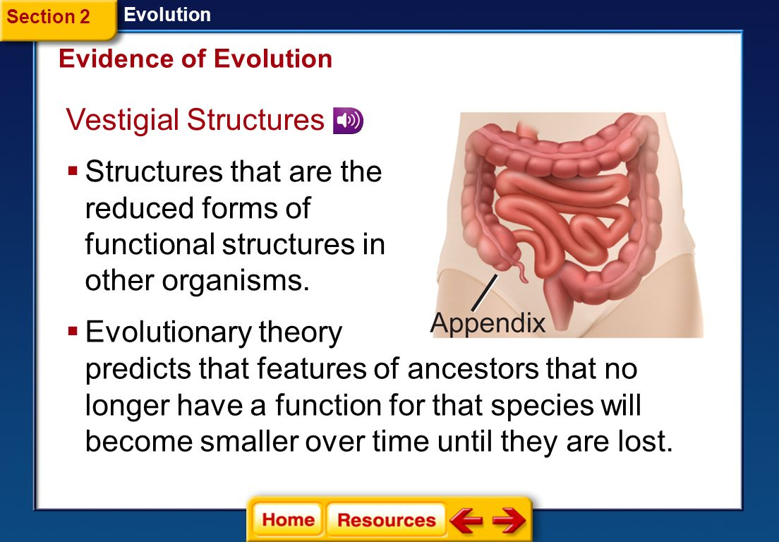 Evidence of evolution in anatomy
