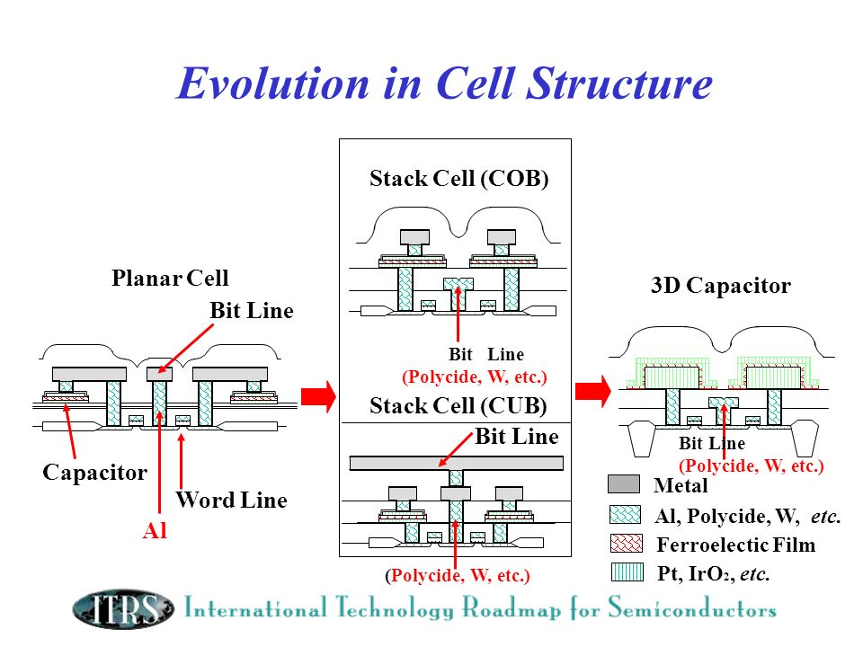 Evolution in Cell Structure