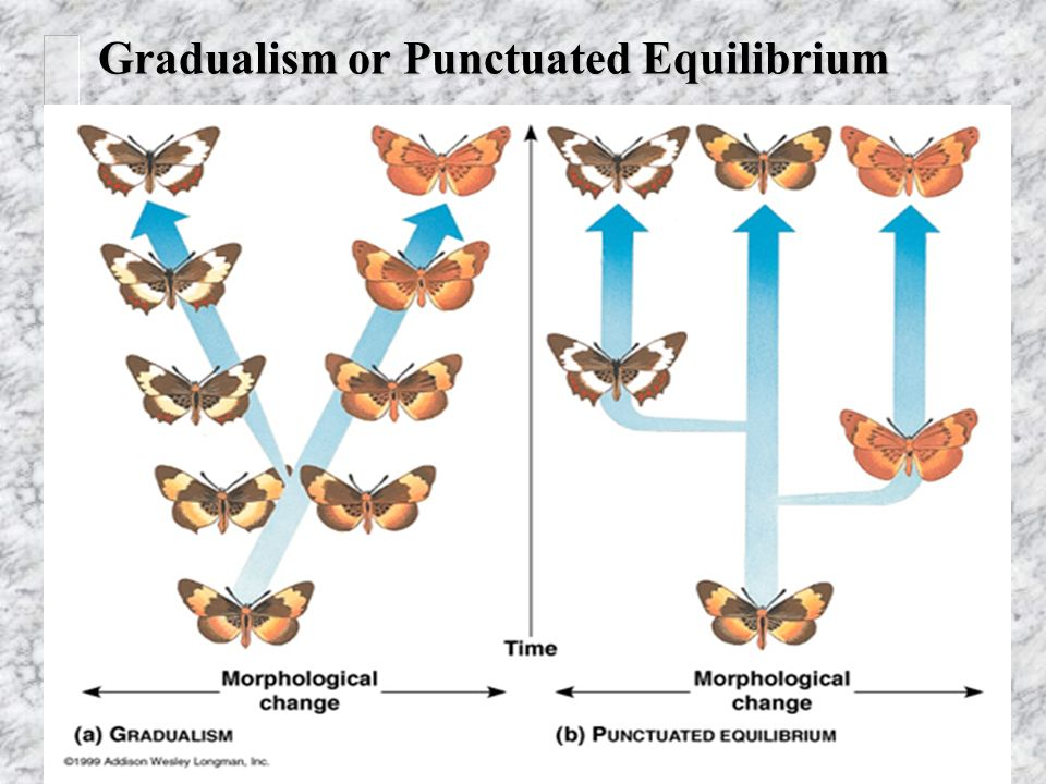 punctuated equilibrium When groups work together, they may develop with a 'punctuated equilibrium' here's details.