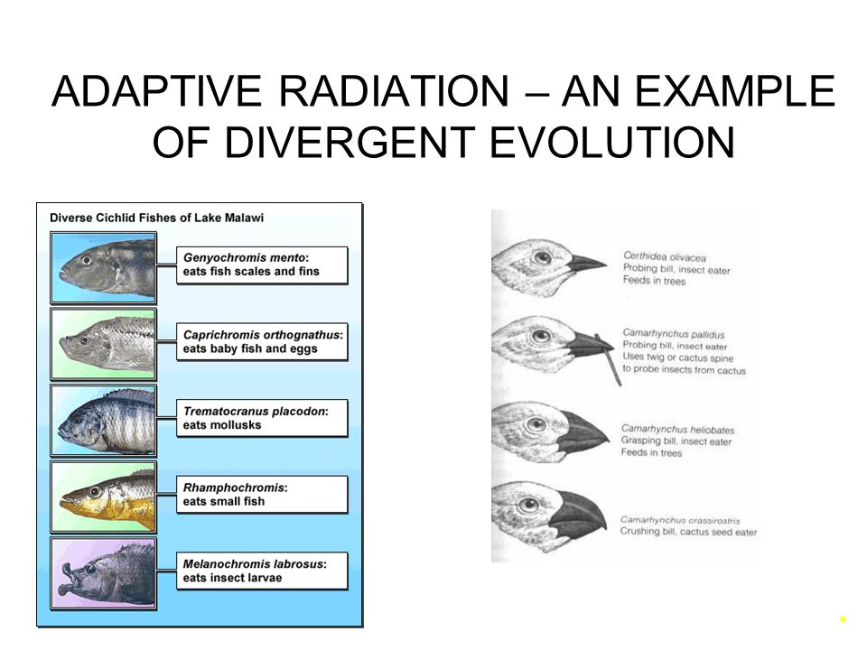 divergent evolution Morphology (pavlovic, 2012) here, we highlight recent research into the convergent and divergent evolution in trap morphology and nutrient acquisition strategies.