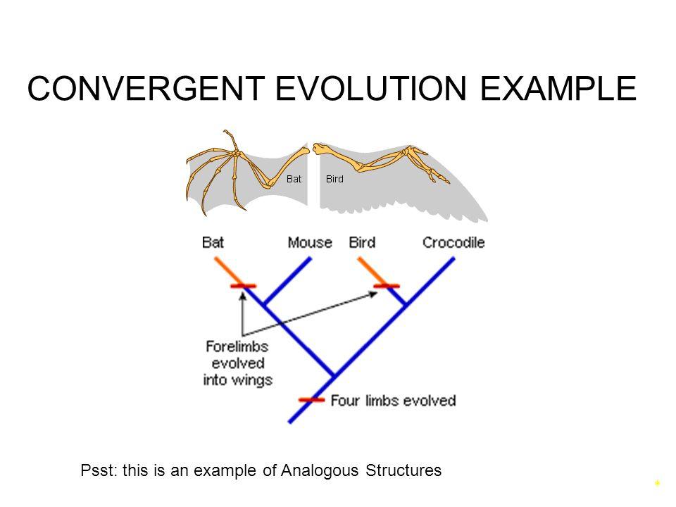 Speciation Patterns Of Evolution Ppt Video Online Download