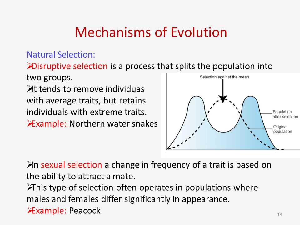 Natural Selection And Sexual Selection