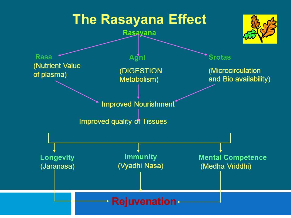 The Rasayana Effect Rejuvenation Rasayana Rasa Agni Srotas