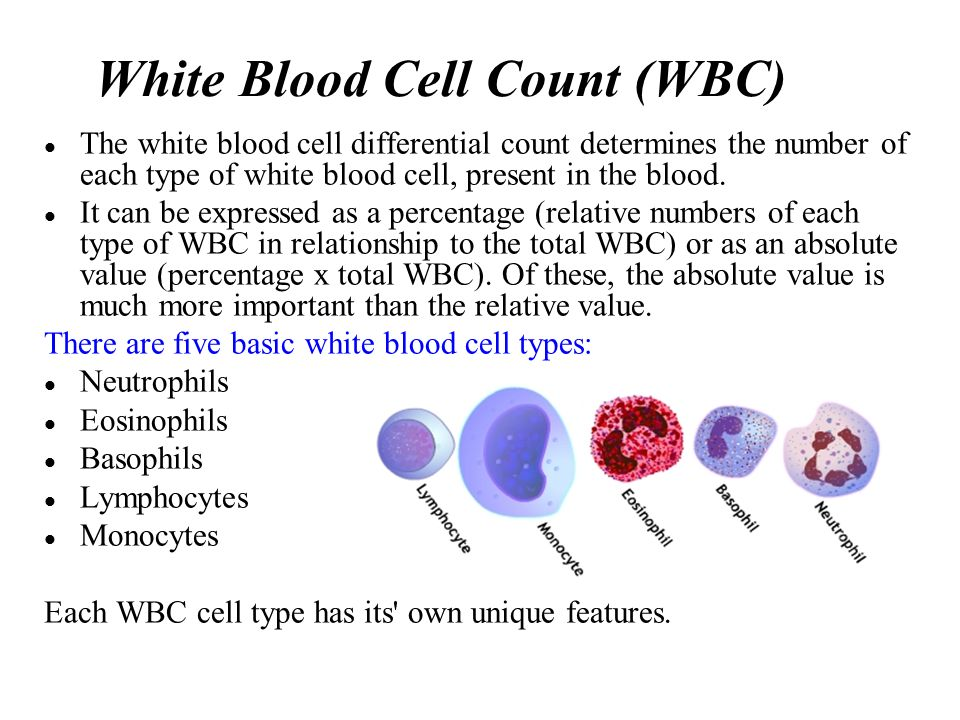 white blood cells White blood cells protect the body against infection some types of white blood cells include lymphocytes, monocytes, and eosinophils each type of white blood cell plays a different role in protecting the body the numbers of each type of white blood cells give important information about the.
