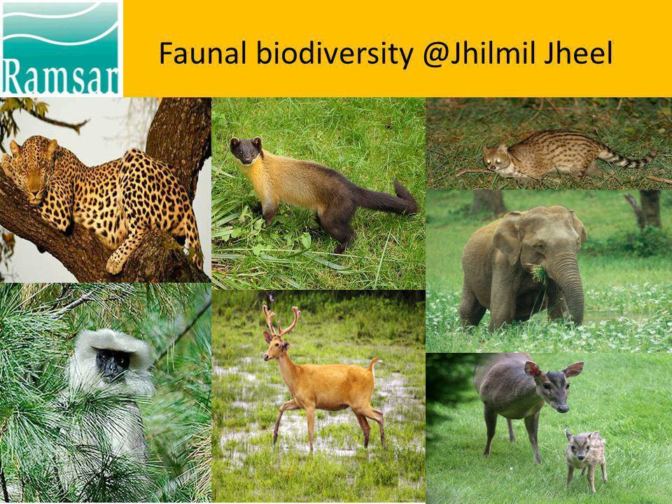 Faunal biodiversity @Jhilmil Jheel