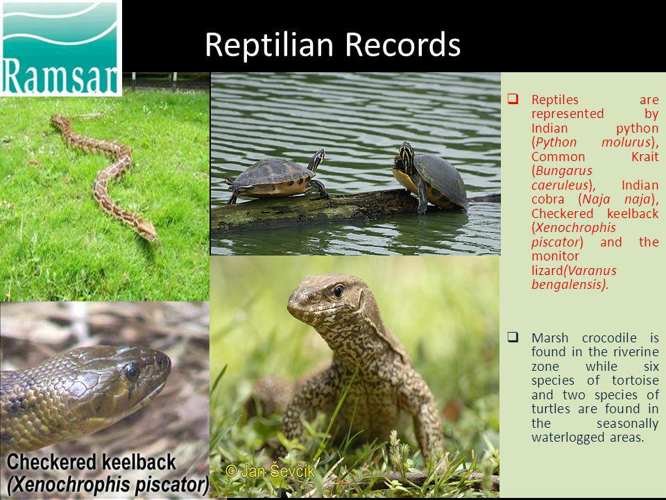 Reptilian Records