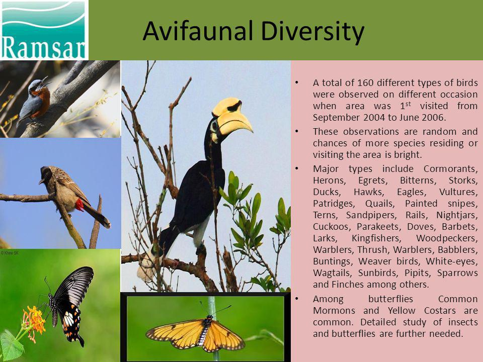 Avifaunal Diversity