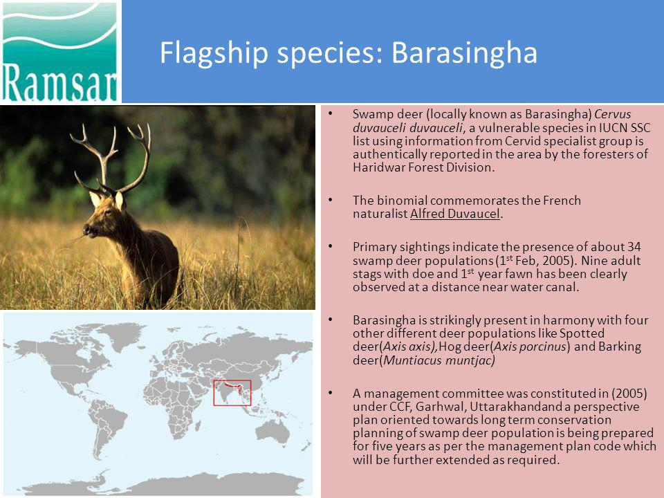 Flagship species: Barasingha