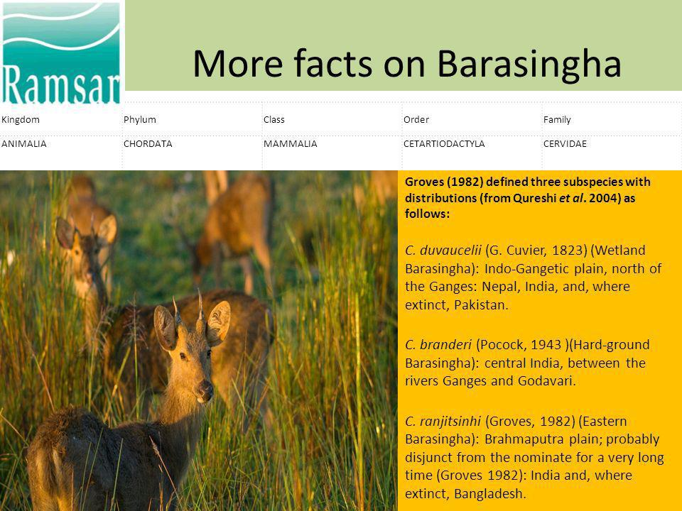 More facts on Barasingha