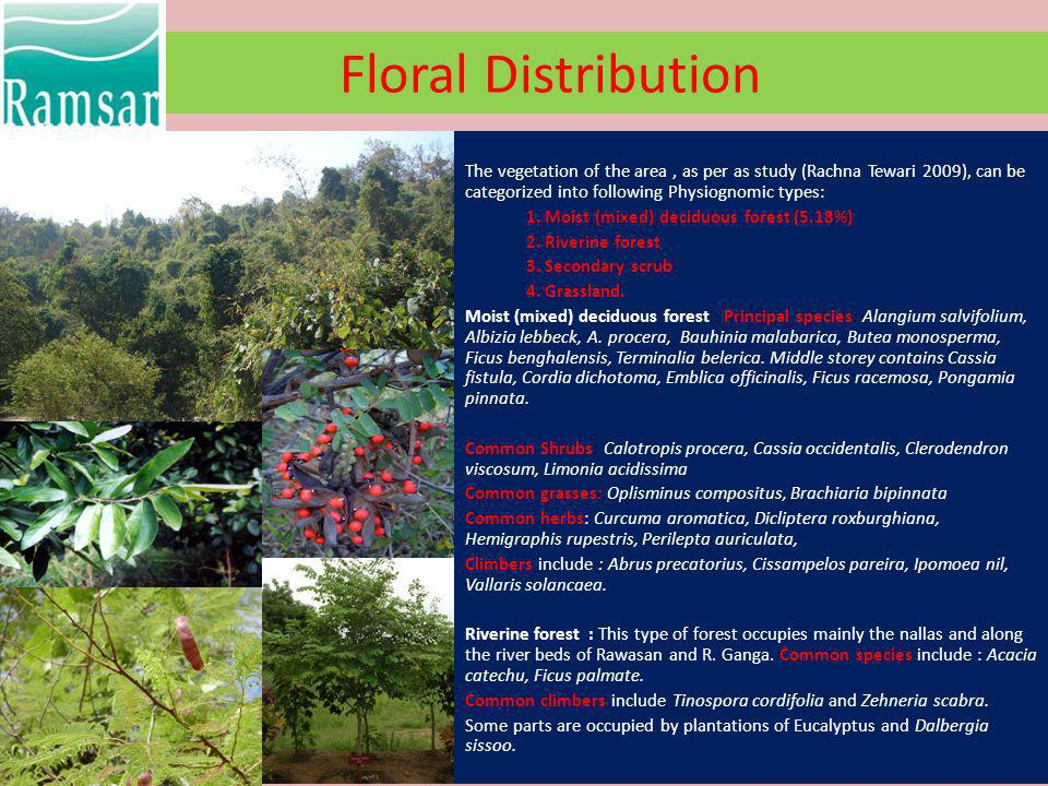 Floral Distribution