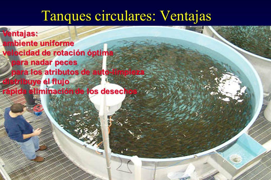 Dise o de estanques de cultivo de peces ppt download for Tanques circulares para acuicultura