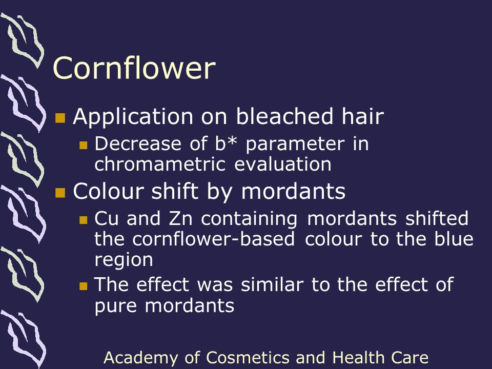 Cornflower Application on bleached hair Colour shift by mordants