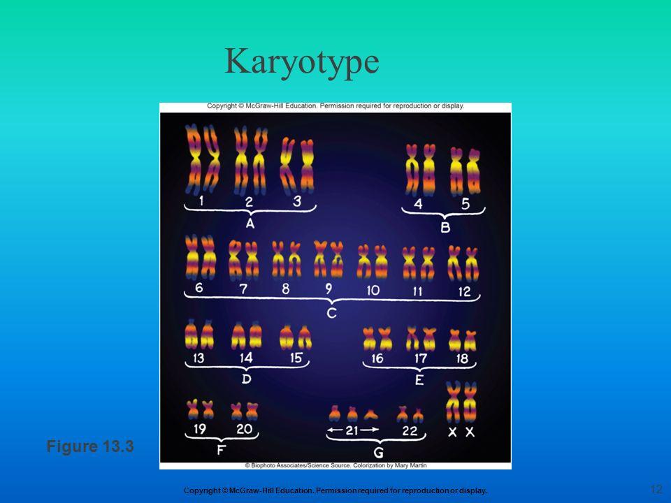 Karyotype Figure 13.3 12