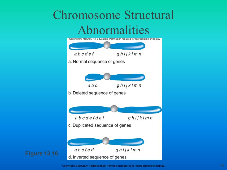 Chromosome Structural Abnormalities