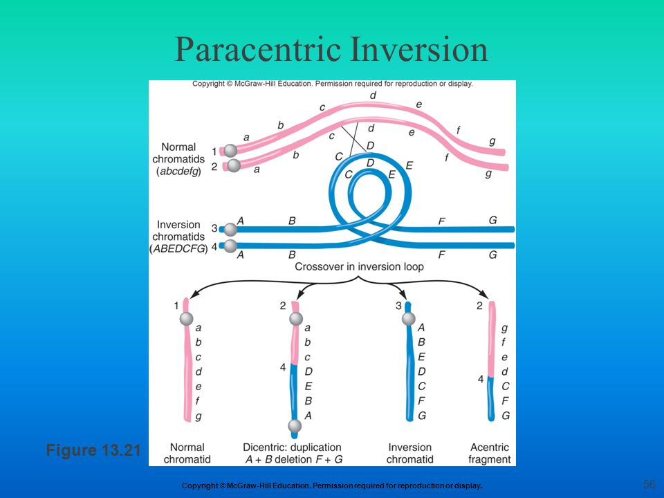 Paracentric Inversion