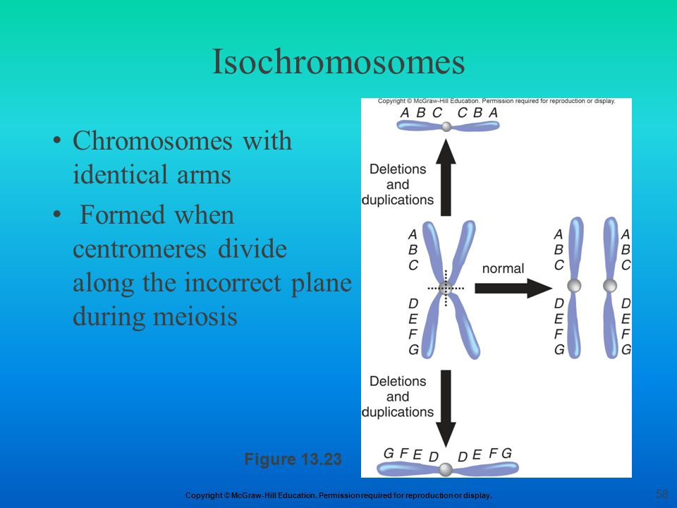Isochromosomes Chromosomes with identical arms