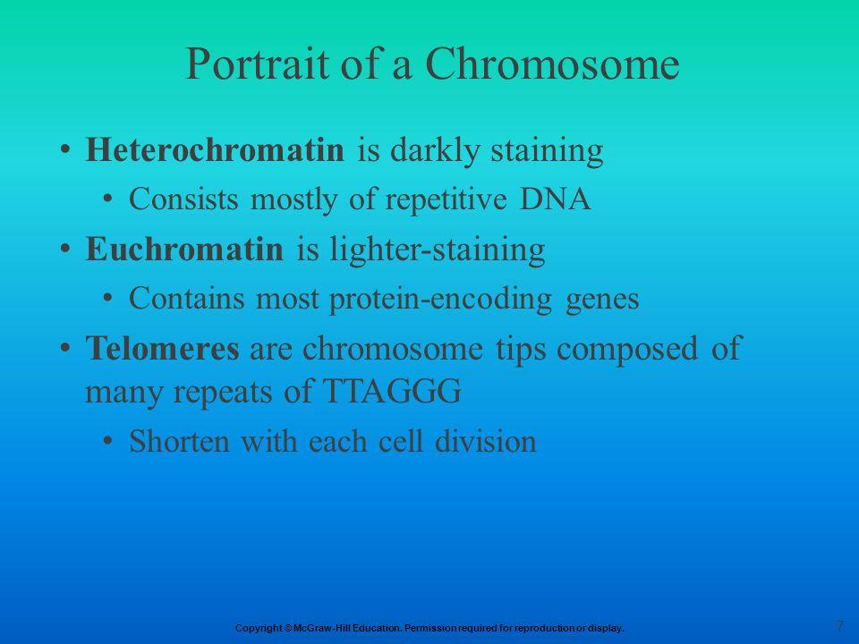 Portrait of a Chromosome