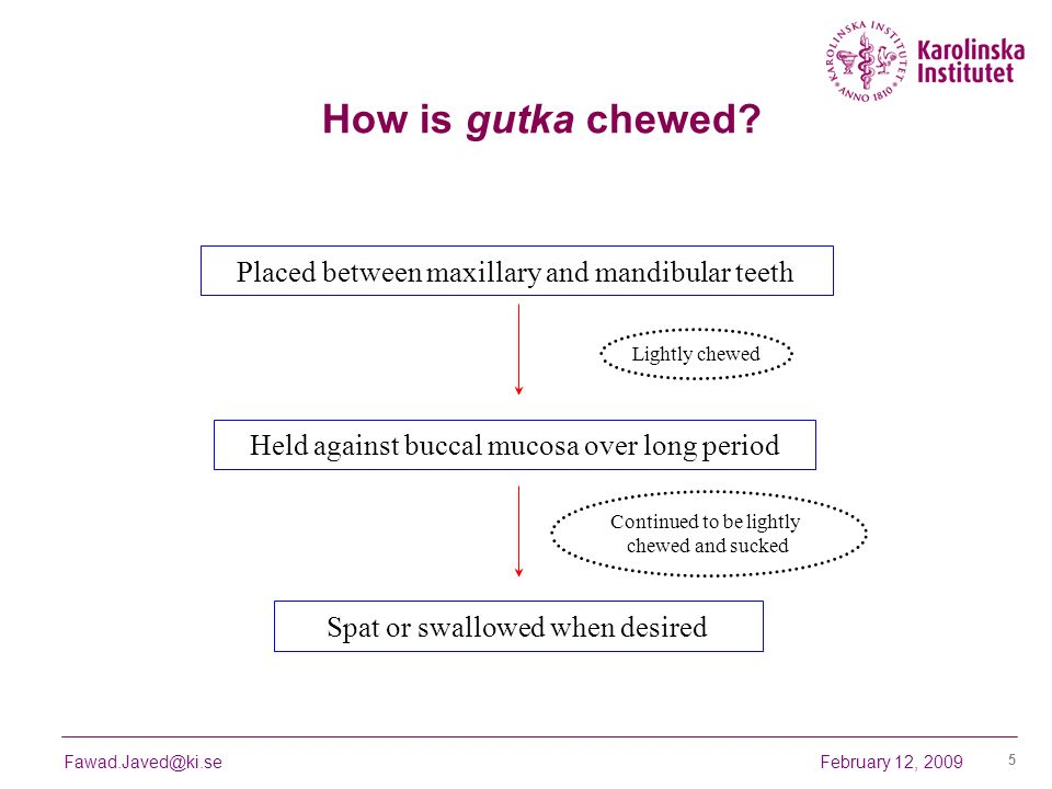 How is gutka chewed Placed between maxillary and mandibular teeth