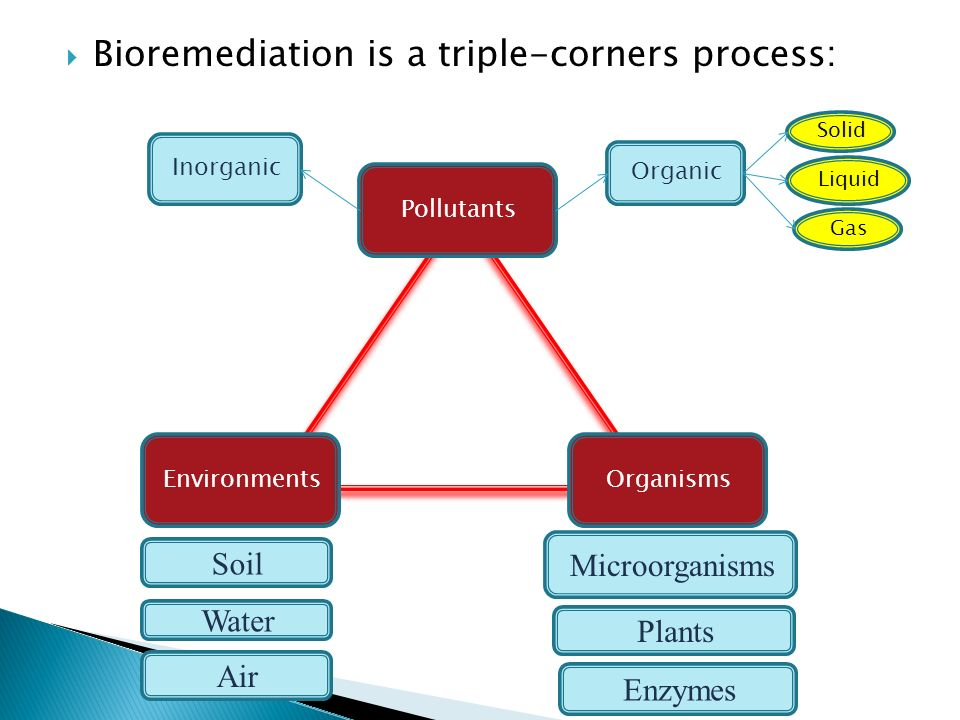 Bioremediation is a triple-corners process: