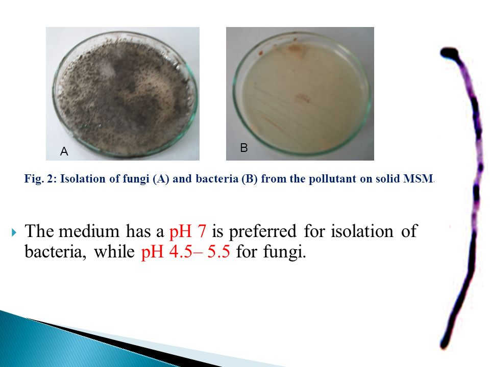 B A. Fig. 2: Isolation of fungi (A) and bacteria (B) from the pollutant on solid MSM.