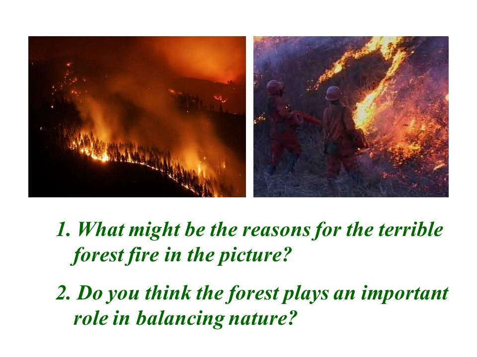 Picture talking 1. What might be the reasons for the terrible forest fire in the picture