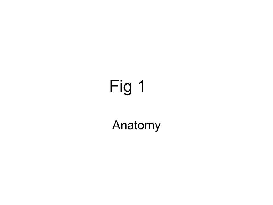 Fig 1 Anatomy