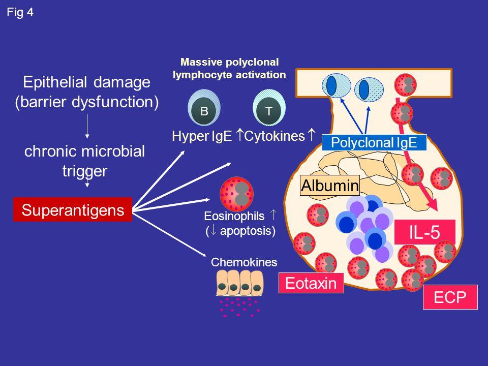 Massive polyclonal lymphocyte activation