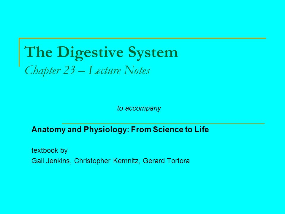 The Digestive System Chapter 23 – Lecture Notes - ppt video online ...