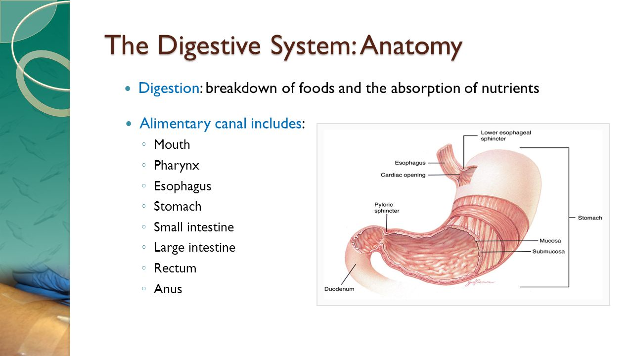 Anus carbohydrate digestion from mouth idea brilliant