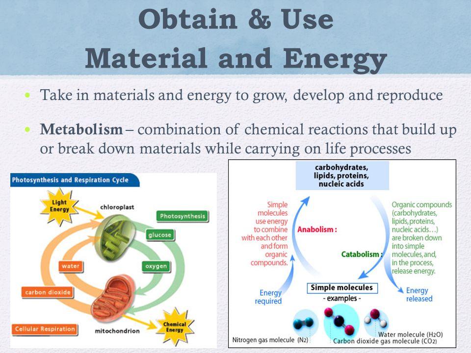 How Do Organisms Obtain And Use Food