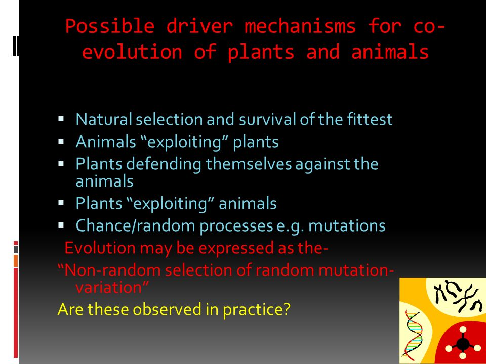 Possible driver mechanisms for co-evolution of plants and animals