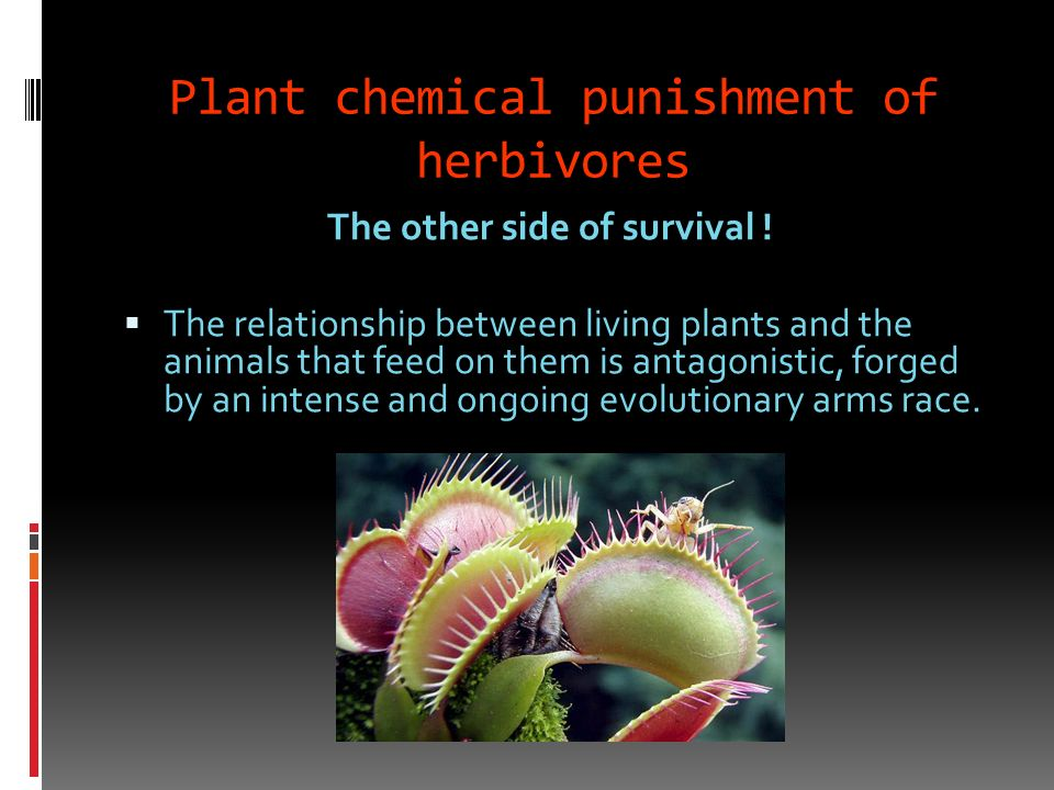 Plant chemical punishment of herbivores