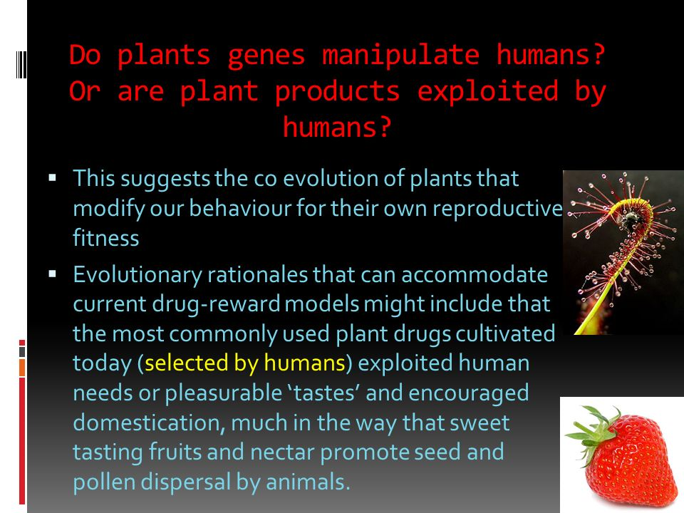 Do plants genes manipulate humans