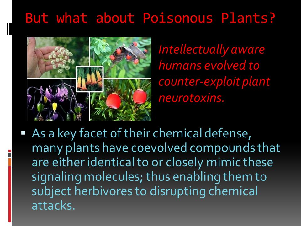 But what about Poisonous Plants