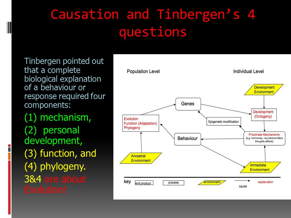 Causation and Tinbergen's 4 questions