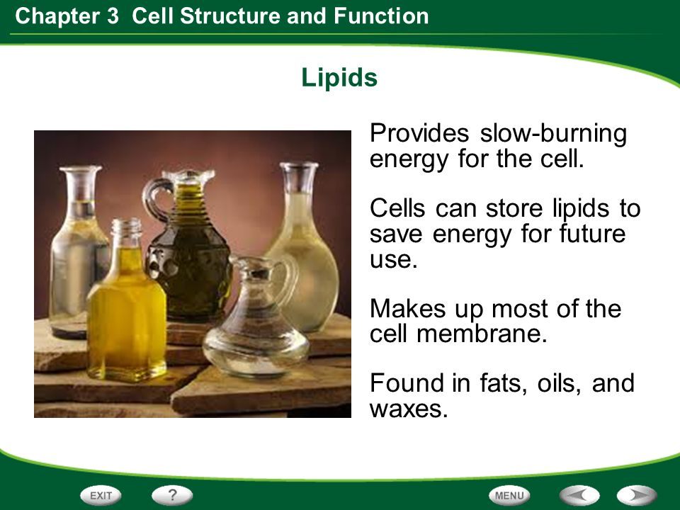 chapter 3 structure and function of