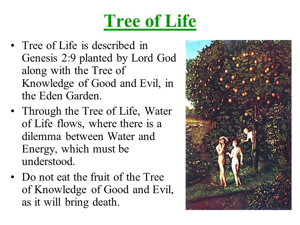 Tree of Life Tree of Life is described in Genesis 2:9 planted by Lord God along with the Tree of Knowledge of Good and Evil, in the Eden Garden.
