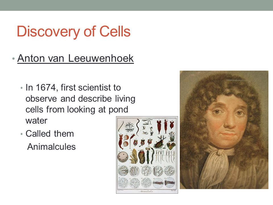 Chapter 3 Cells 3.1 Cell Theory. - ppt video online download