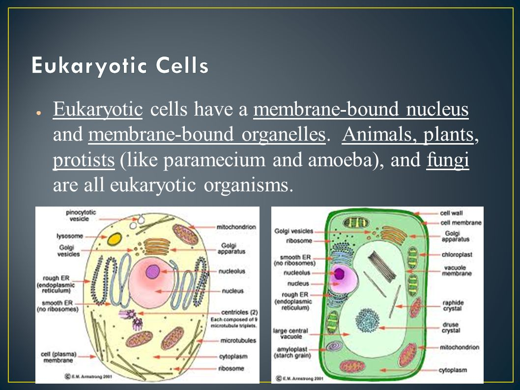 a survey of eukaryotic cells and