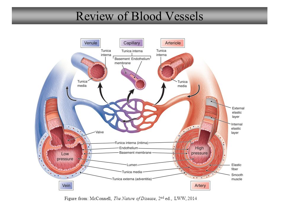 blood vessels How can the answer be improved.