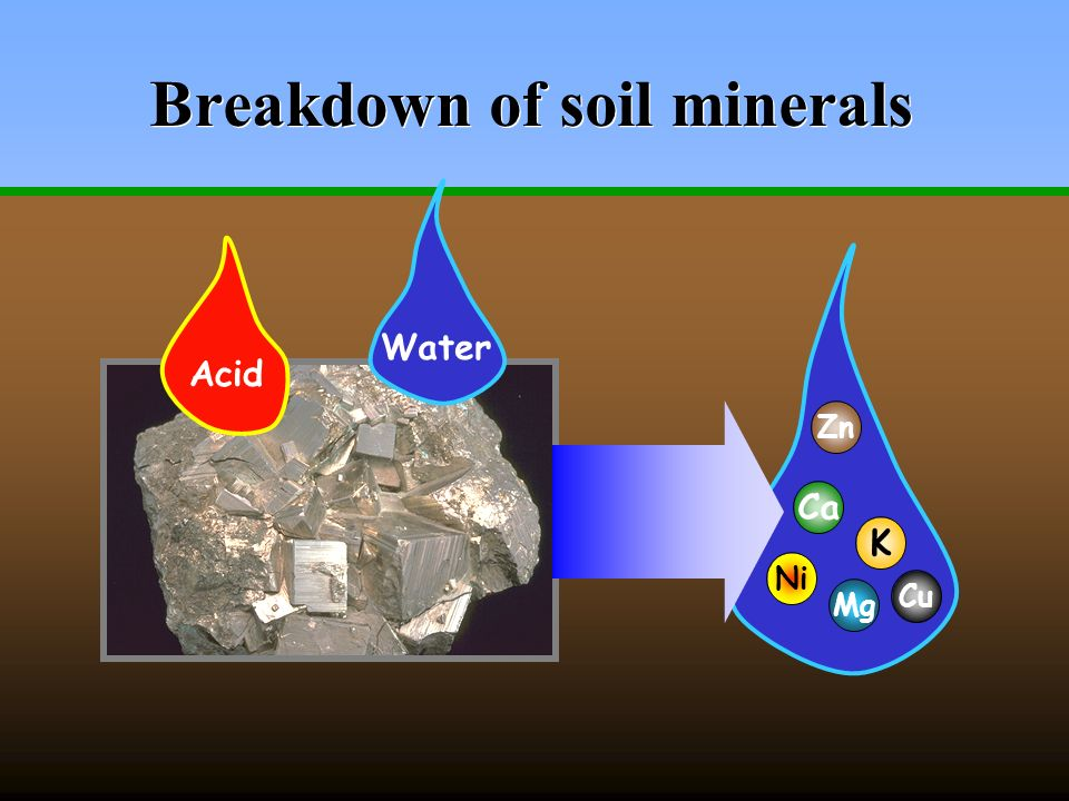 How soils supply plant nutrients an introduction to soil for Minerals present in soil