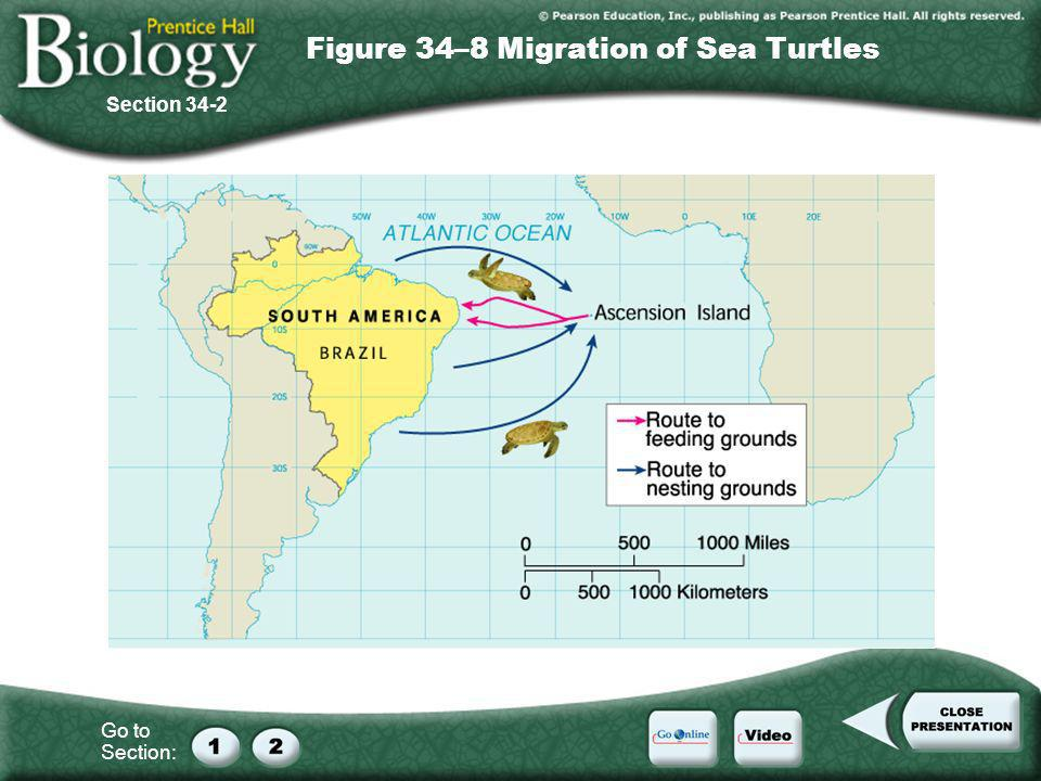 Figure 34–8 Migration of Sea Turtles