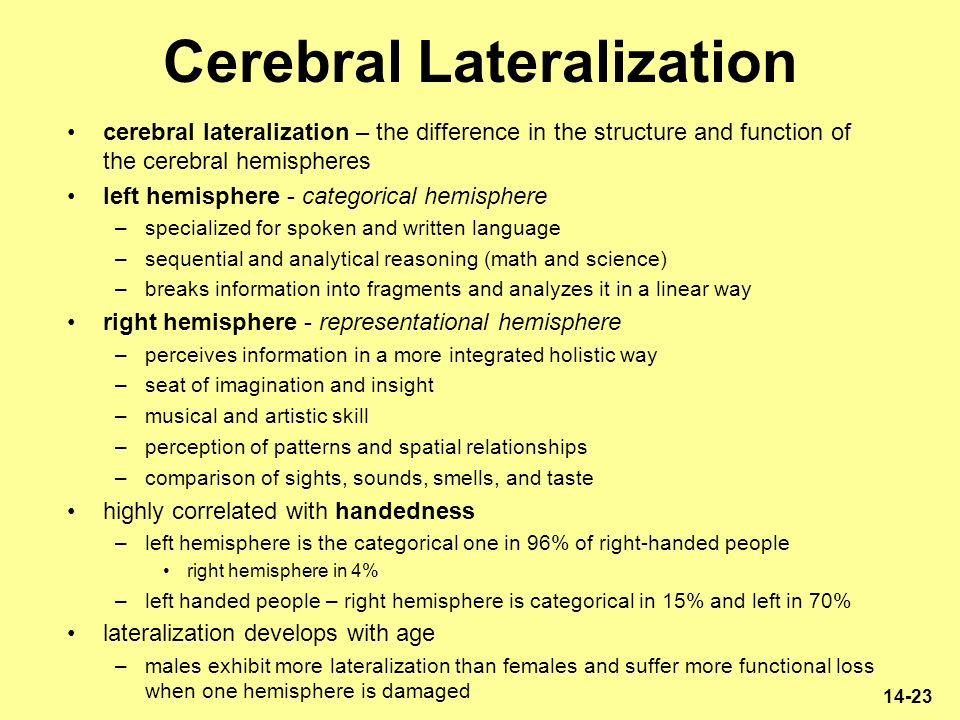 cerebral lateralization and functionality Each cerebral hemisphere has an outer layer of cerebral cortex which is of grey matter and in the interior of the function lateralization such as semantics.