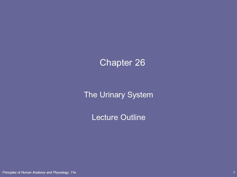 28+ [chapter 26 the urinary system ppt]