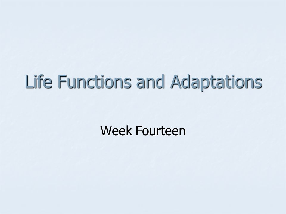Life Functions and Adaptations
